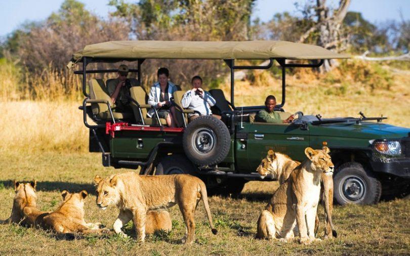 mejores safaris para visitar con niños
