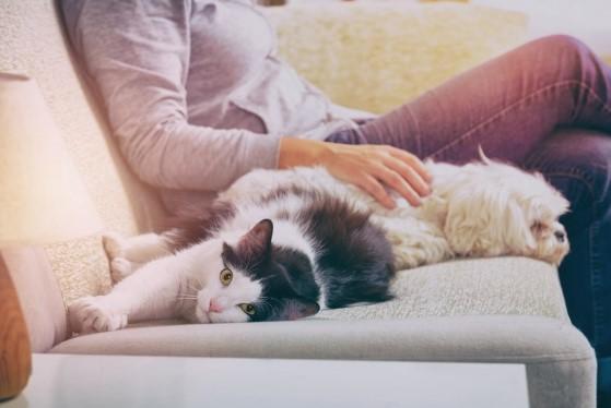 ideas para pasar el tiempo con tu mascota