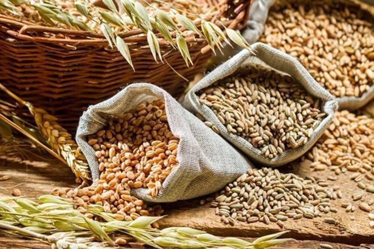 Es un crédito para el ministerio y la capacidad de la Corporación de Alimentos de la India (FCI), de propiedad estatal, que ninguna parte del país haya sido testigo de escasez de granos alimenticios en medio de la pandemia.
