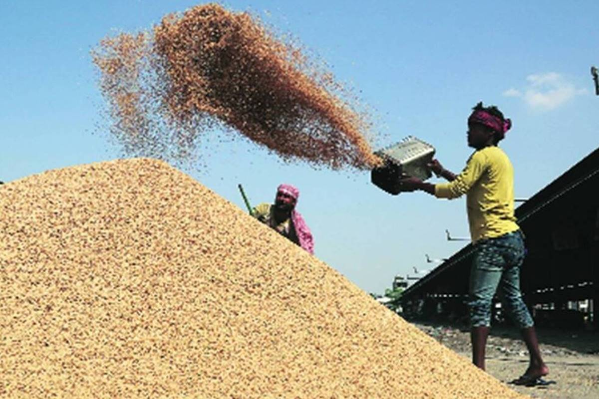 """""""En la actual temporada de comercialización de Kharif (KMS) 2020-21, el gobierno continúa adquiriendo cultivos de Kharif 2020-21 en el MSP de los agricultores bajo los esquemas de MSP existentes, como se hizo en temporadas anteriores"""", dijo un comunicado oficial."""