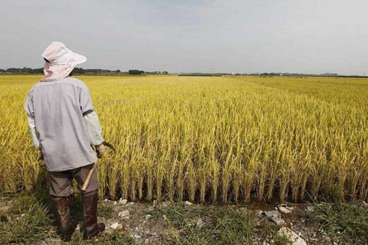 El líder campesino Rakesh Tikait ha planteado la cuestión del pago directo a las cuentas bancarias de los agricultores.